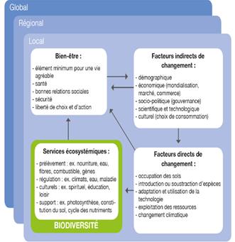 Schema services ecosystemiques